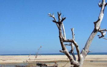 Wisata Pantai Pahiwi Sumba